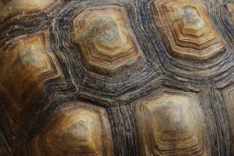 Sluit omhoog Schildpadschild royalty-vrije stock afbeelding