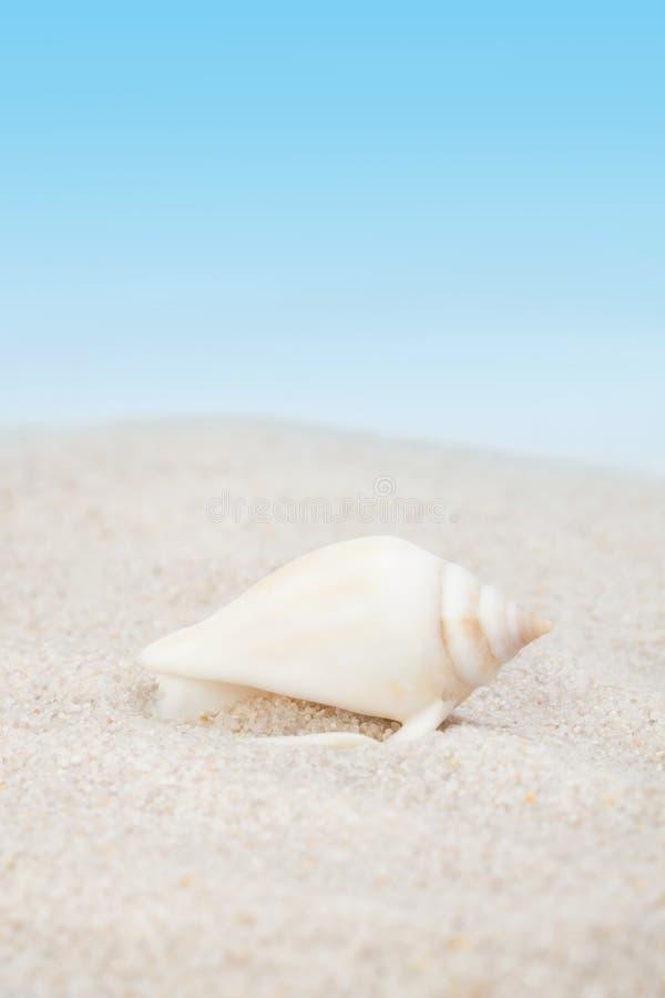 Keurige zeeschelp op het zandige strand royalty-vrije stock foto