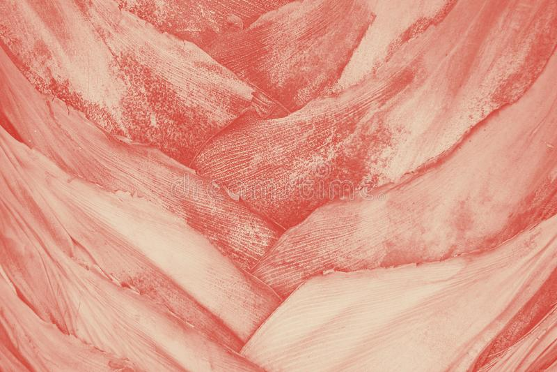 Sluit omhoog textuur van grijze pastelkleur gekleurde tropische palmboomstam koraalduotone stock fotografie