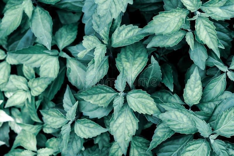 Sluit omhoog tropische de textuur van het achtergrond aard groene blad Donkere Aardachtergrond, groene bladeren in natuurlijk lic royalty-vrije stock afbeeldingen