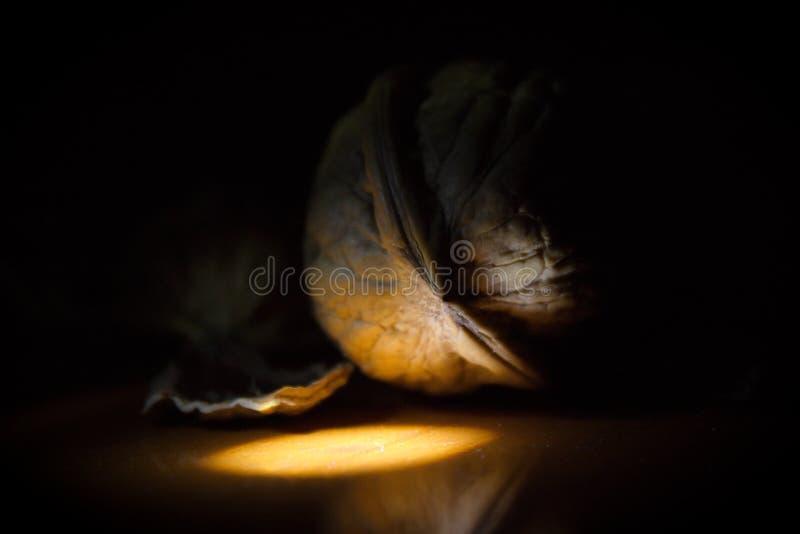 Sluit omhoog van één enkele okkernoot naast overblijfselen van gebarsten shell in een kleine heldere schijnwerper en een duistern royalty-vrije stock foto