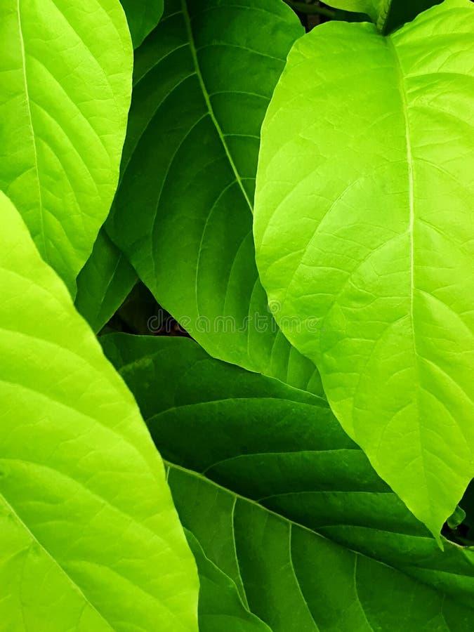 Sluit omhoog van abstracte groene bladtextuur als achtergrond stock foto