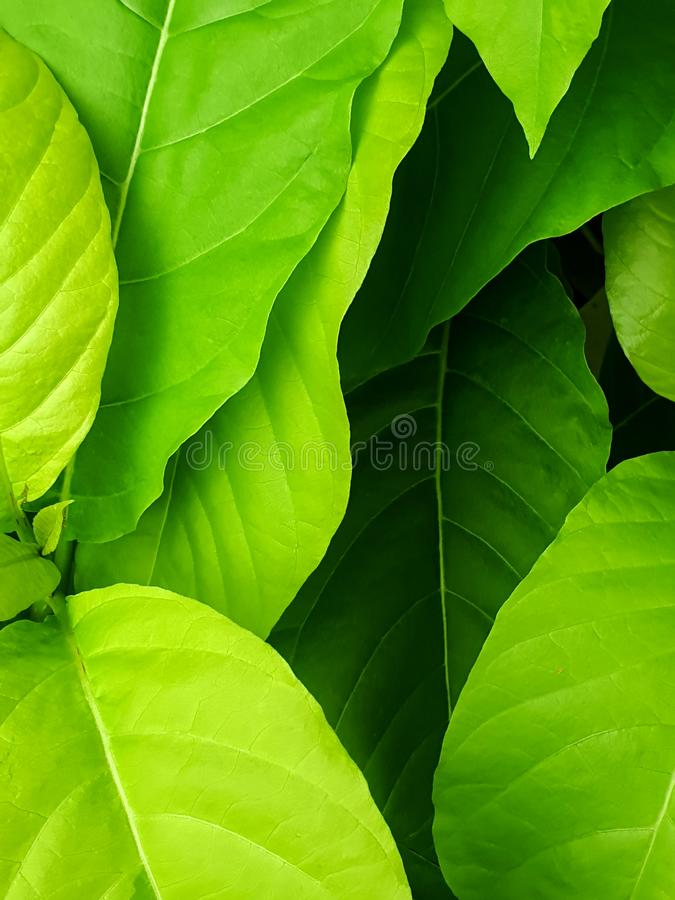 Sluit omhoog van abstracte groene bladtextuur als achtergrond royalty-vrije stock foto's