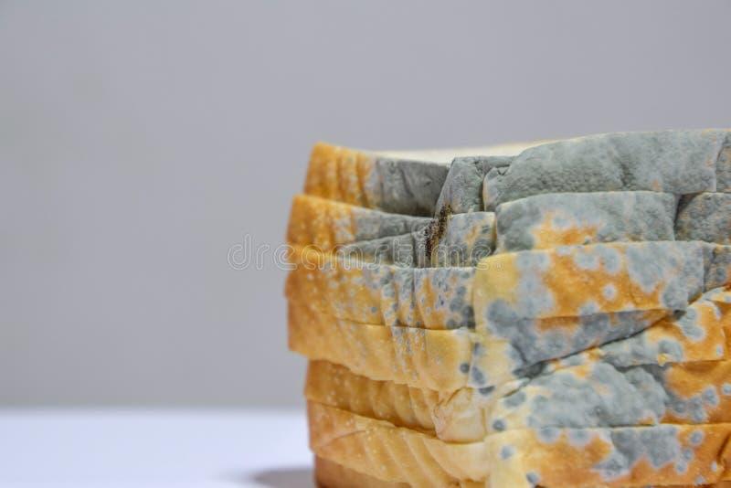 Sluit omhoog van beschimmeld brood op witte achtergrond, verliep kan niet any more eten omdat het voor gezondheid schadelijk is royalty-vrije stock foto