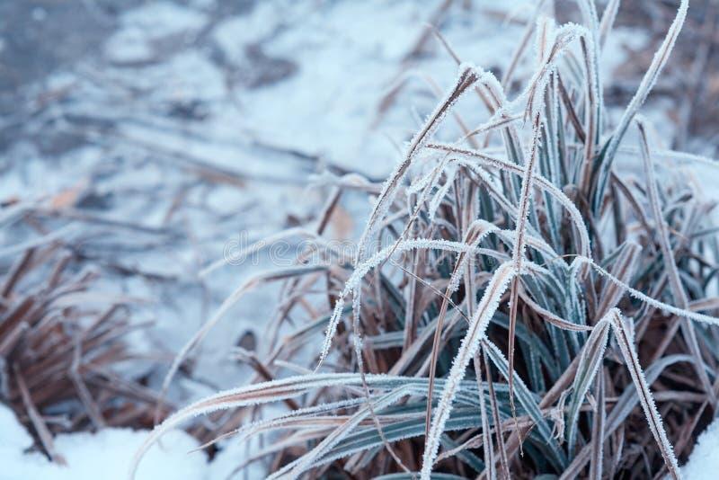 Sluit omhoog van bevroren grasbladen royalty-vrije stock foto