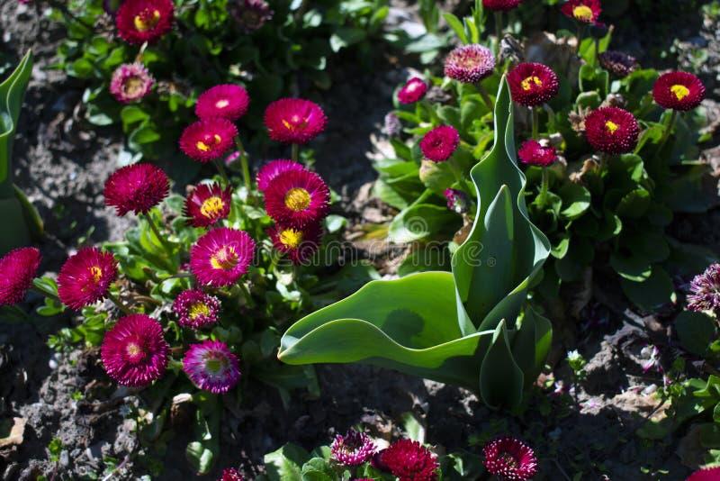 Sluit omhoog van bloemen in het park royalty-vrije stock afbeelding