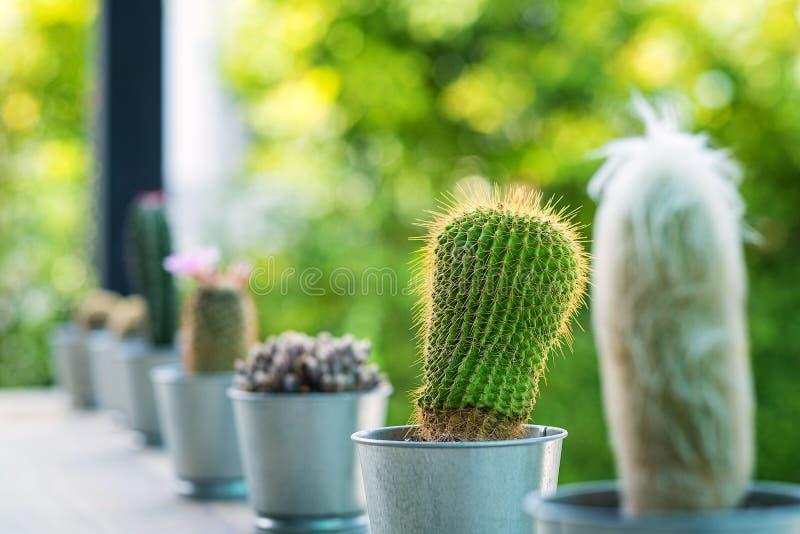 Sluit omhoog van bol gevormde cactus met lange doornenwhit onduidelijk beeldachtergrond stock foto's
