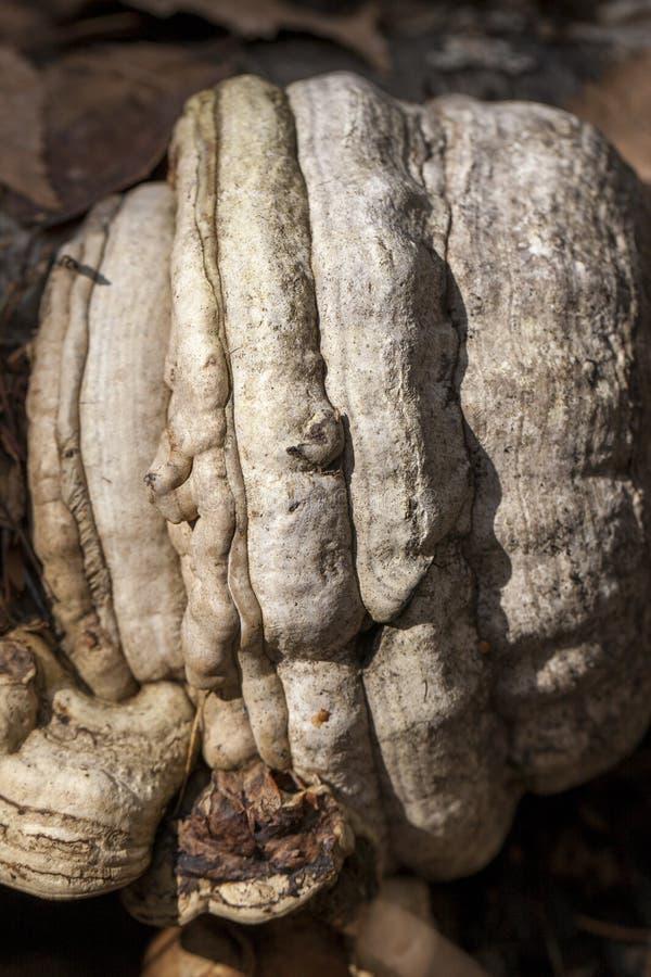 Sluit omhoog van boompaddestoel stock foto