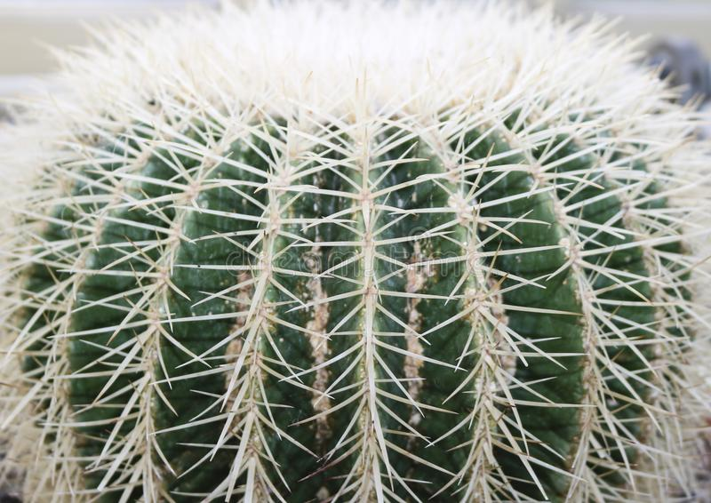 Sluit omhoog van cactus om detail van stekelig te tonen stock foto's