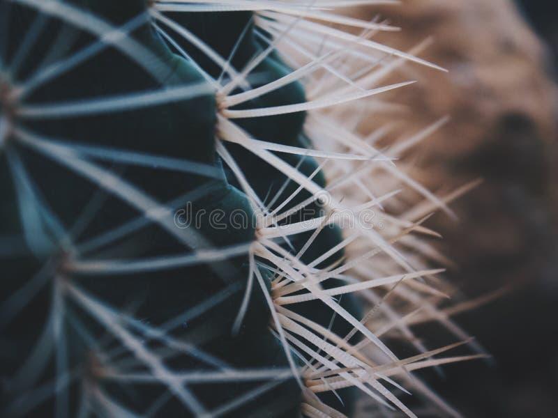 Sluit omhoog van cactusdoornen stock afbeeldingen