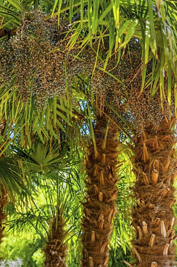 Sluit omhoog van data die op een Palm groeien royalty-vrije stock foto