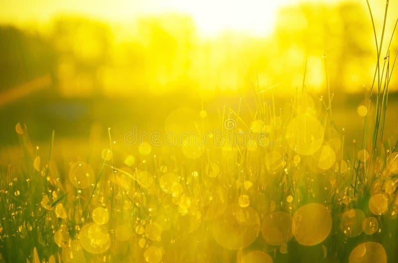 Sluit omhoog van de bezinning van waterdalingen in vers groen die gras door gouden warm licht van het toenemen zon wordt verlicht royalty-vrije stock foto's