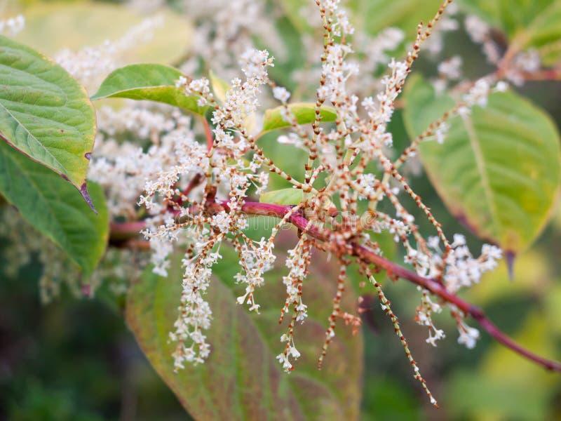 Sluit omhoog van de mooie wilde witte kleine bloemenherfst royalty-vrije stock fotografie