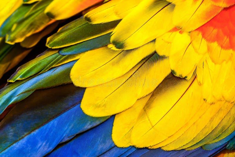 Sluit omhoog van de Scharlaken vogelveren van de Araara, exotische aardachtergrond en textuur stock afbeelding