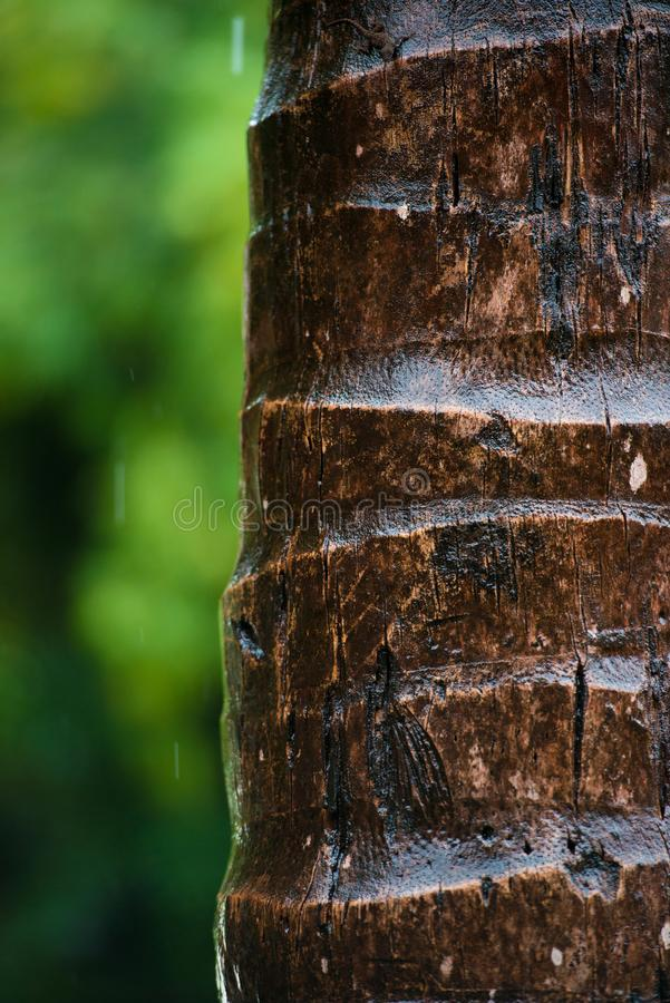 Sluit omhoog van de schors van een palm, achtergrondtextuurpatroon Onder regen royalty-vrije stock foto's