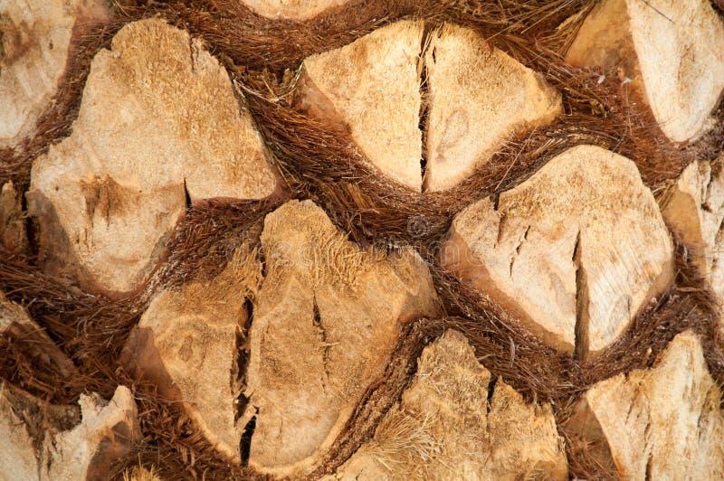 Sluit omhoog van de schors van een palm, achtergrondtextuur royalty-vrije stock afbeelding