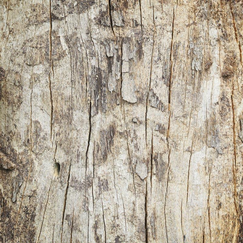 Sluit omhoog van dode boomboomstam stock foto
