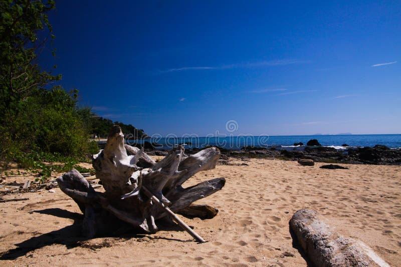 Sluit omhoog van drijfhout tegen blauwe hemel op eenzaam strand op tropisch eiland Ko Lanta, Thailand stock afbeeldingen