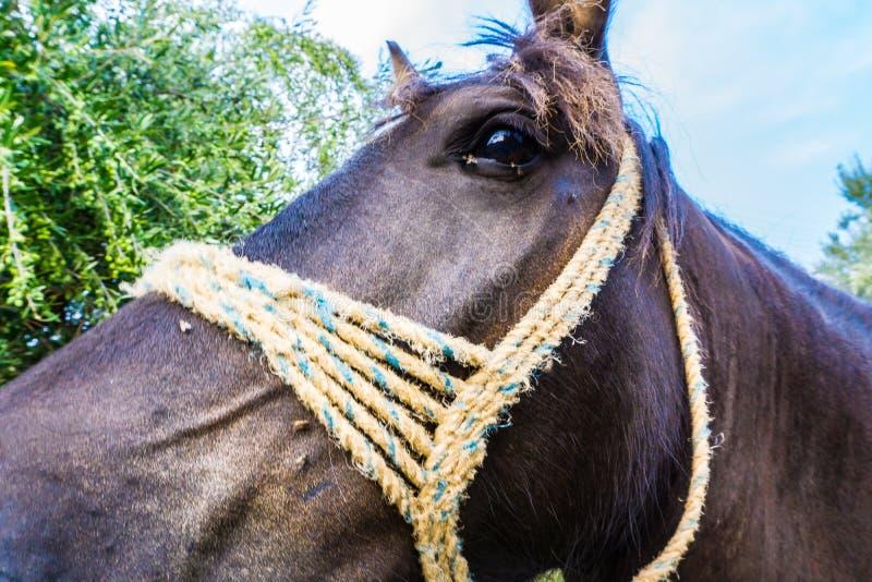Sluit omhoog van een bruin paardgezicht in het platteland in Mani Greece royalty-vrije stock fotografie