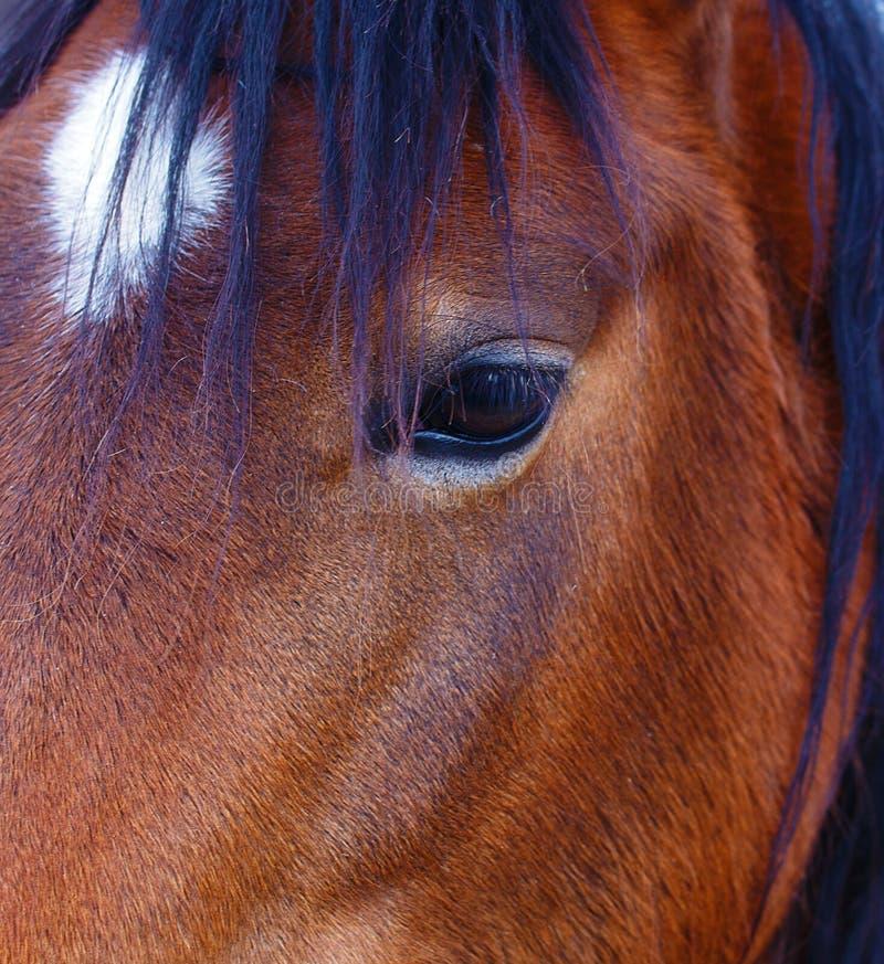 Sluit omhoog van een bruin paardoog Op zwarte achtergrond royalty-vrije stock foto