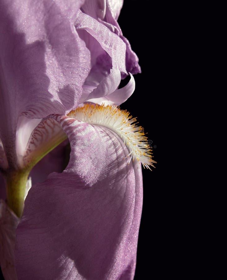 Sluit omhoog van een de lentebloem stock fotografie