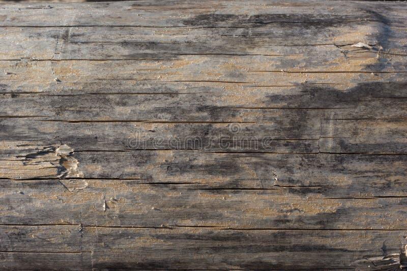 Sluit omhoog van een in de zon gedroogd scots logboek van de pijnboomboom met al verwijderde schors royalty-vrije stock foto