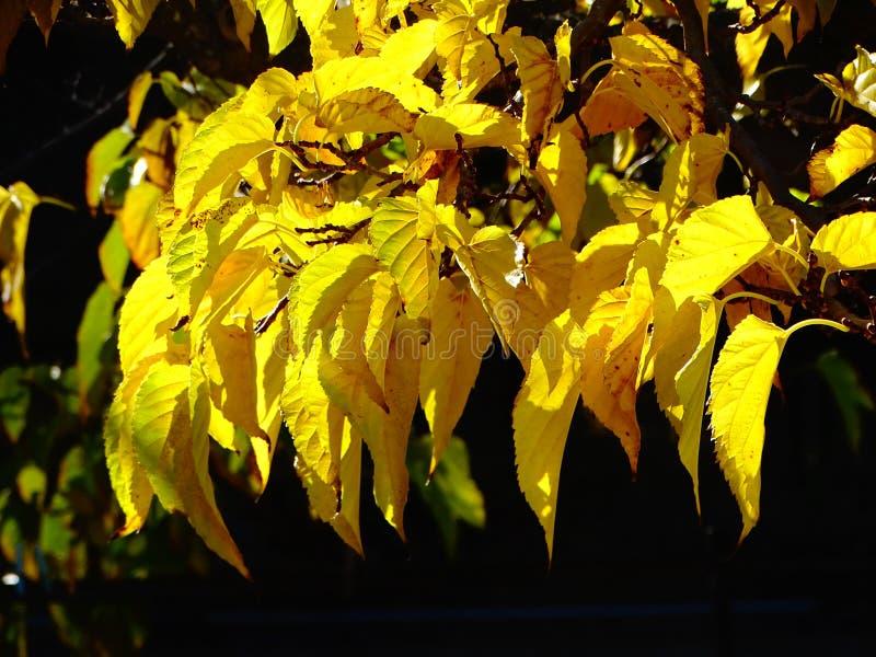 Sluit omhoog van een geel gebladerte in automn stock foto's