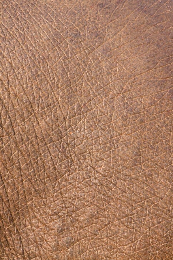 Sluit omhoog van een Indische huid van Olifanten stock afbeelding