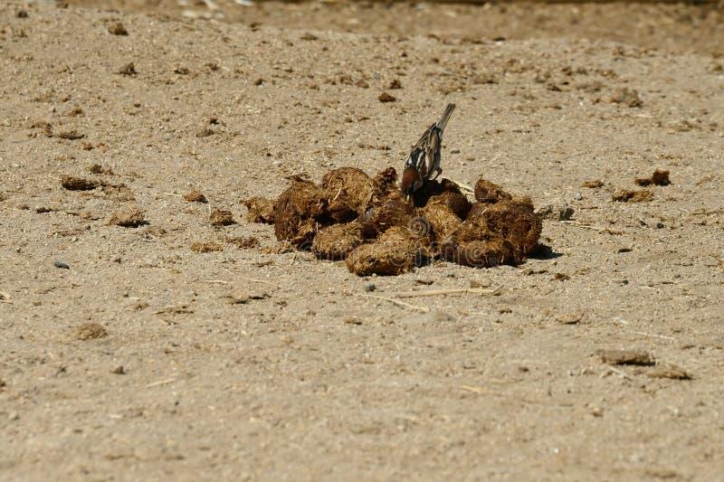 Sluit omhoog van een kleine vogel stock foto's