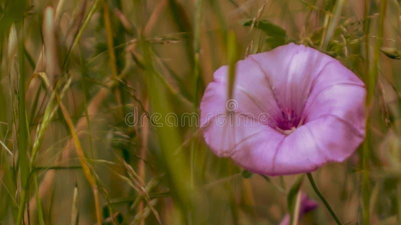 Sluit omhoog van een kleurrijke wildflowerweide stock foto