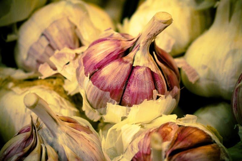 Sluit omhoog van een knoflookhoofd Talrijke garlics in de markt De tanden en de kaap van het knoflook worden waargenomen stock foto's