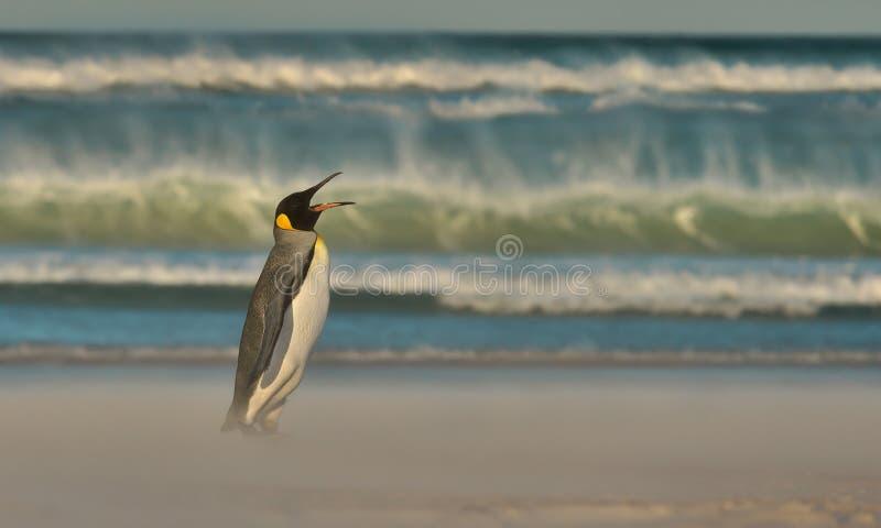 Sluit omhoog van een Koningspinguïn door een stormachtige oceaan royalty-vrije stock foto