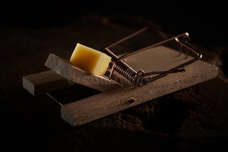 Sluit omhoog van een muisval met kaas wordt gelokt die stock afbeelding