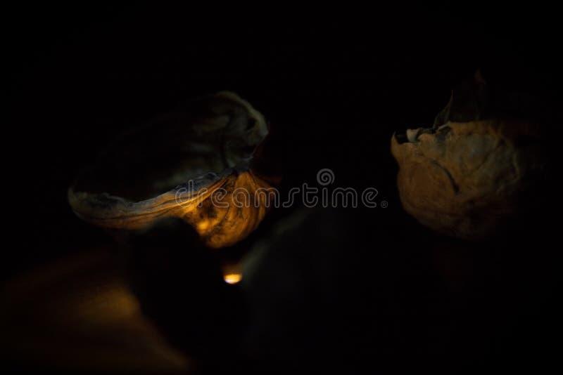 Sluit omhoog van een paar okkernootshells die naast een warm licht in de duisternis samenkomen stock fotografie