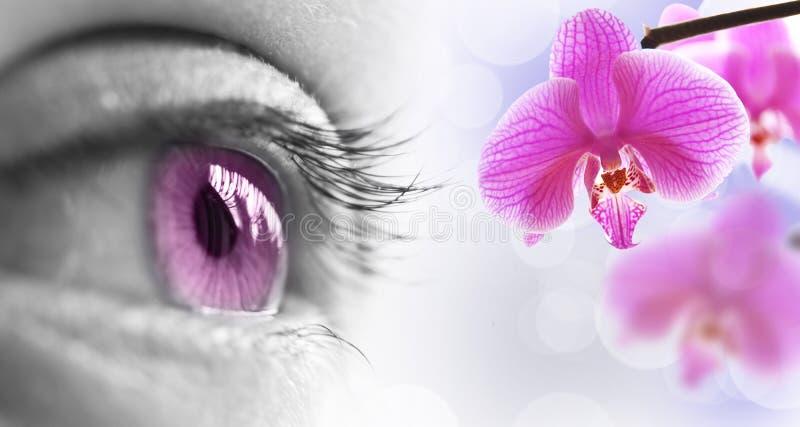 Sluit omhoog van een roze oog en een bloem stock fotografie
