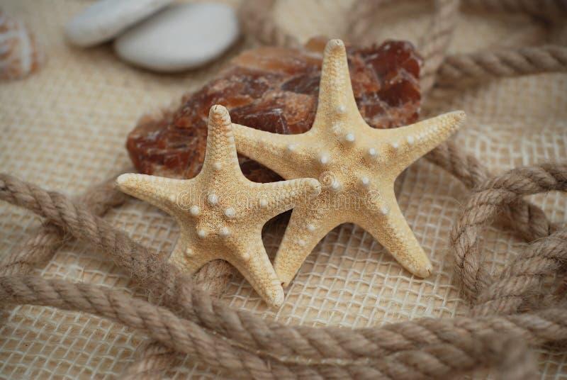 Sluit omhoog van een Sarfish op Rustieke Marine Background met Exemplaarruimte Het concept van de zomer en van de vakantie stock foto