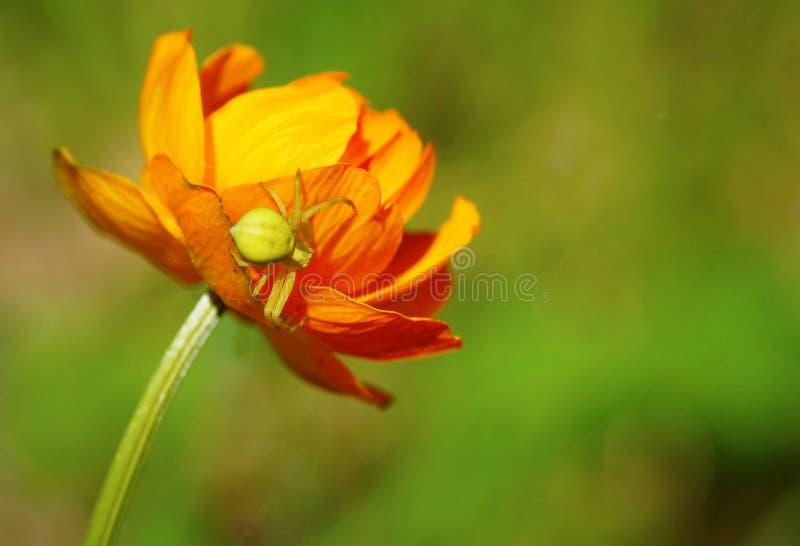 Sluit omhoog van een spinzitting op de heldere mooie bloem stock foto's