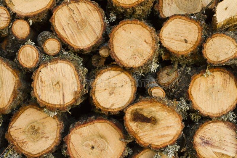 Eiken brandhout royalty-vrije stock afbeelding