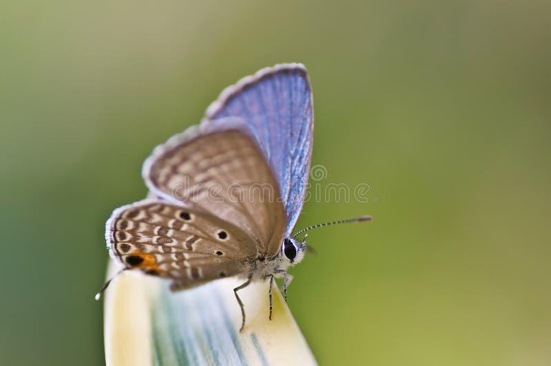 Sluit omhoog van een vlinder stock foto's