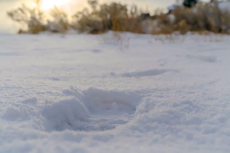 Sluit omhoog van een voetafdruk ge?mponeerd op de poederachtige witte sneeuw die de grond behandelen stock foto's