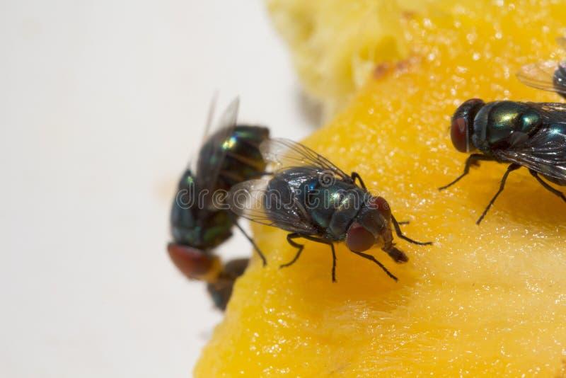Sluit omhoog van een Vuile Huisvlieg op een Vork die in Geel voedsel wordt behandeld royalty-vrije stock foto's