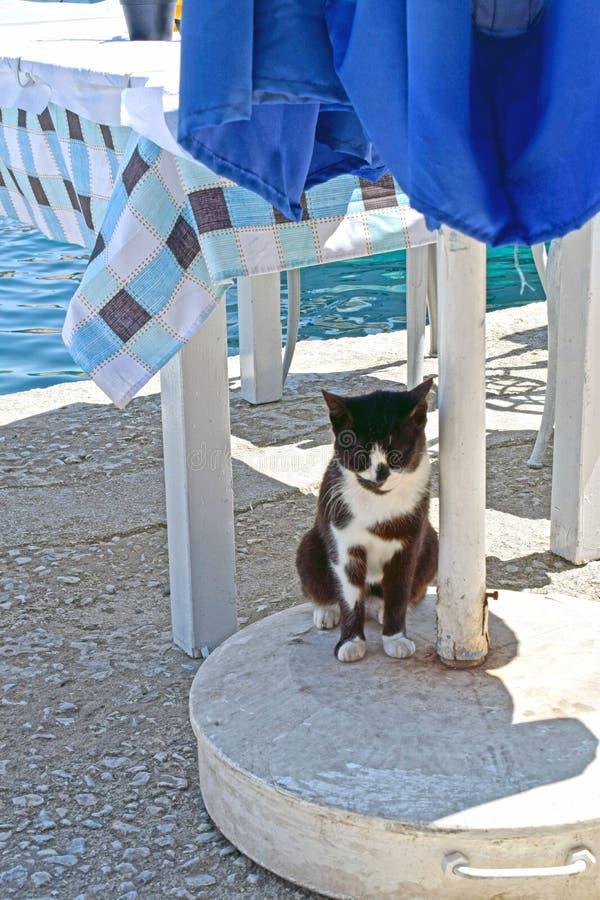 Sluit omhoog van een zwart-witte kat kijkend vooruit proberend om van de hitte in de schaduw te stellen royalty-vrije stock afbeeldingen