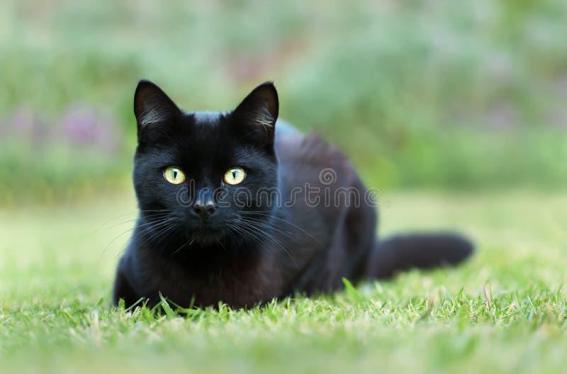 Sluit omhoog van een zwarte kat liggend op gras in de tuin stock foto