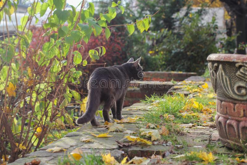 Sluit omhoog van een zwarte kat op het gras in de achtertuin royalty-vrije stock afbeeldingen