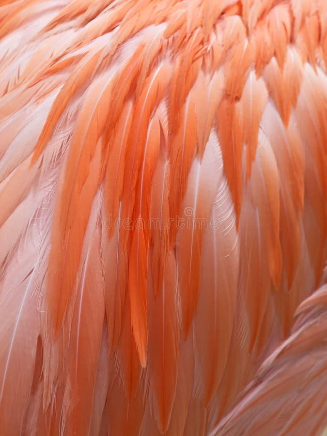 Sluit omhoog van Flamingoveren royalty-vrije stock foto's