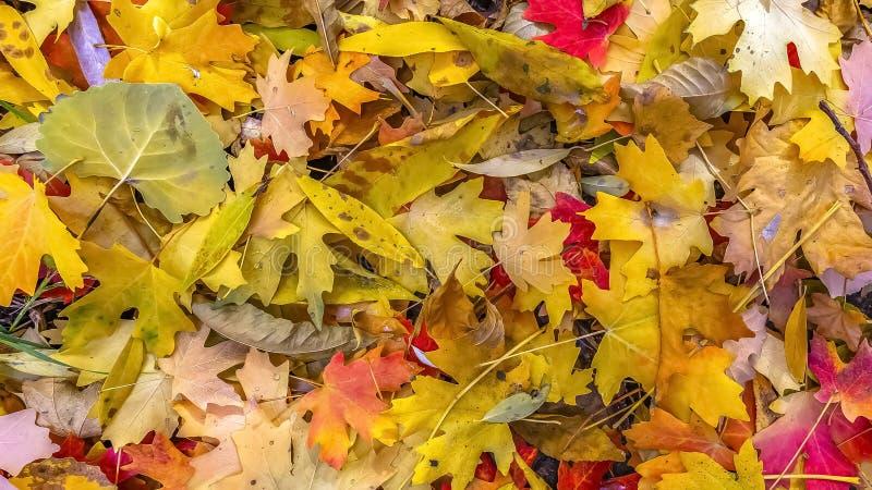 Sluit omhoog van gevallen bladeren ter plaatse in de herfst royalty-vrije stock afbeelding