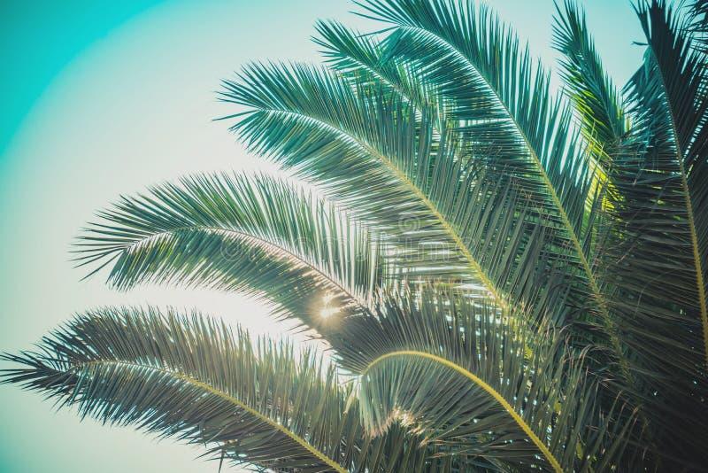 Sluit omhoog van groen palmblad met zonstralen die door breken stock afbeelding