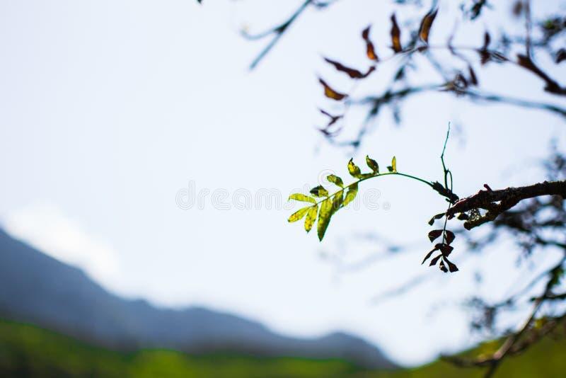 Sluit omhoog van groene bladeren op een tak in de lente of de zomer met defocused achtergrond royalty-vrije stock fotografie