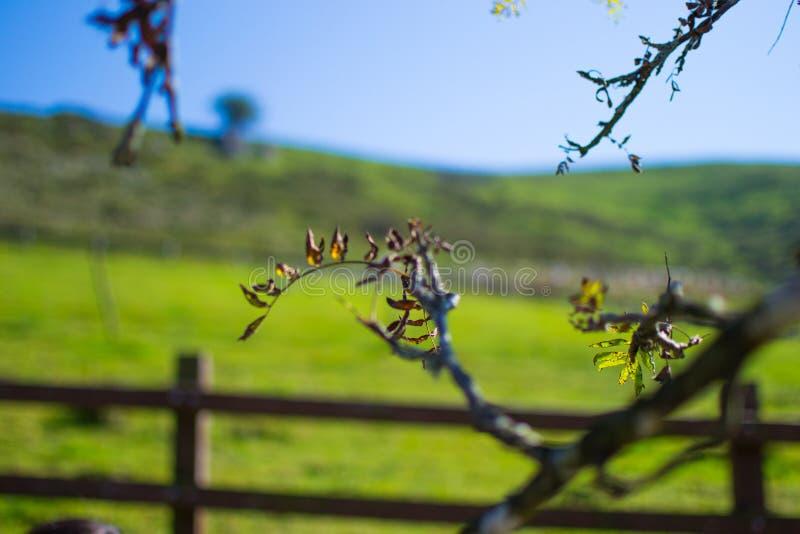 Sluit omhoog van groene bladeren op een tak in de lente of de zomer met defocused achtergrond royalty-vrije stock afbeelding