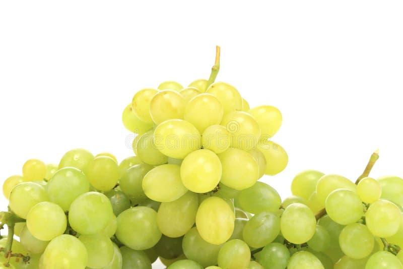 Sluit omhoog van groene rijpe druiven. royalty-vrije stock afbeeldingen